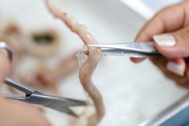 Глисты у кур (гельминты), причины, лечение, профилактика