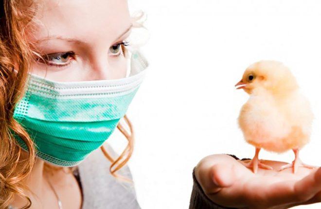 Птичий грипп возбудитель