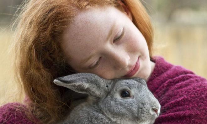 Кролик в руках
