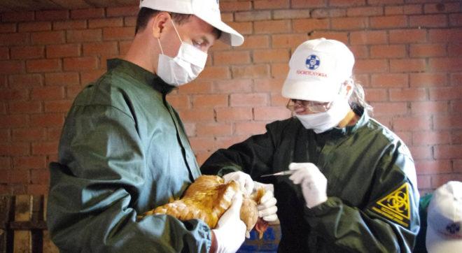 Ветеринар и куры