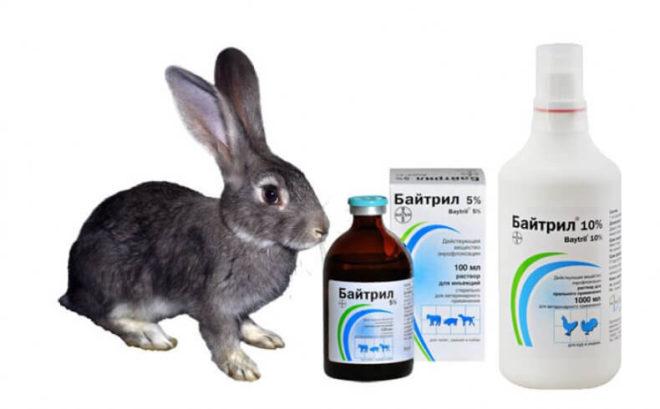 Байтрил кроликам