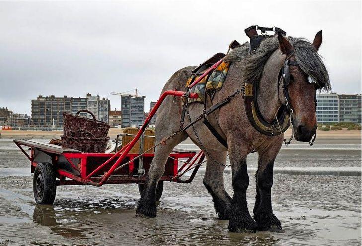 Брабансон лошадь с телегой
