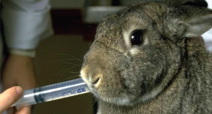 как пропоить кроликов от кокцидиоза стоп кокцид