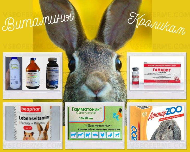Витамины для кроликов в воду: какие лучше, как выбрать