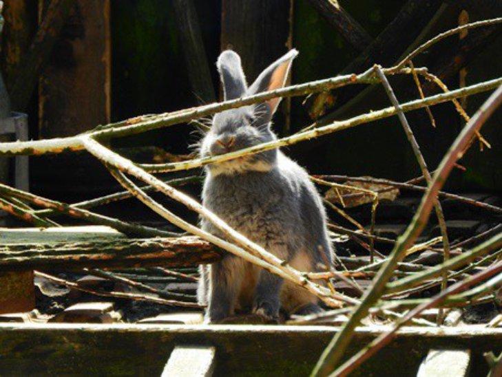 Советы как кормить кролика ветками