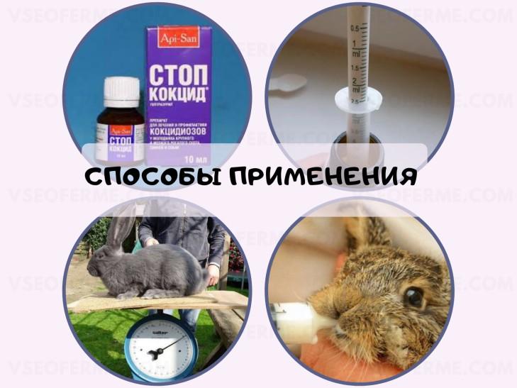 как применять стоп кокцид кроликам