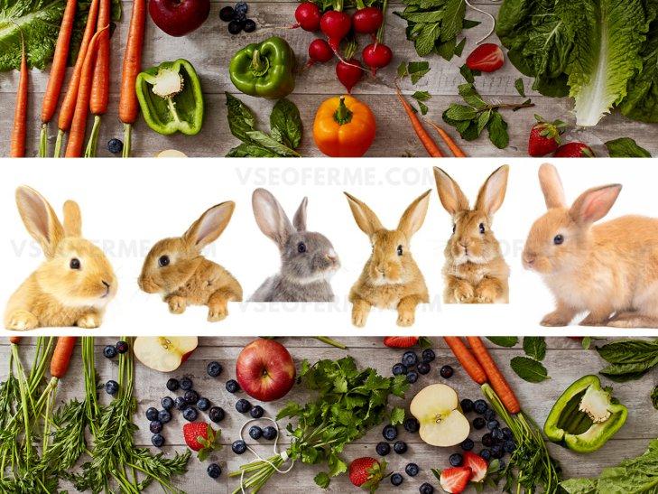 Натуральные витамины для кроликов