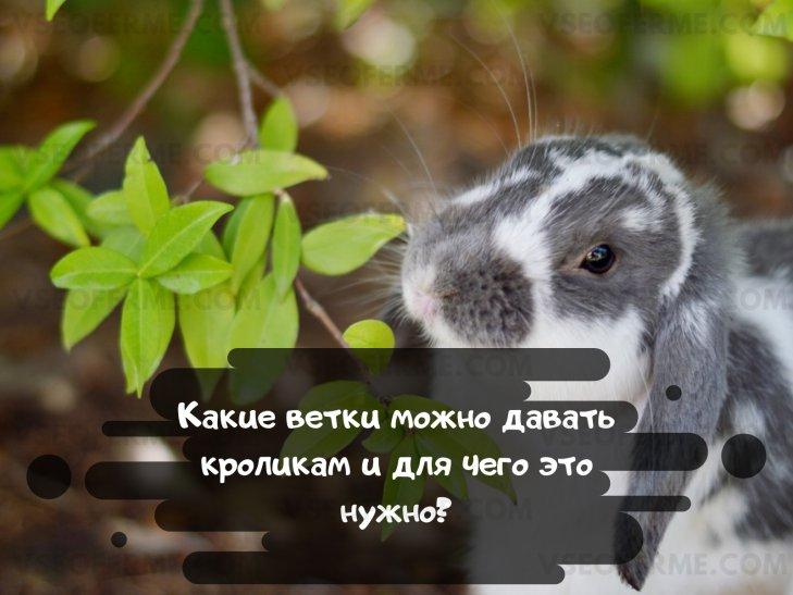 Какие ветки можно кроликам?