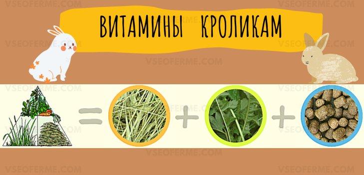 какие витамины лучше для кроликов