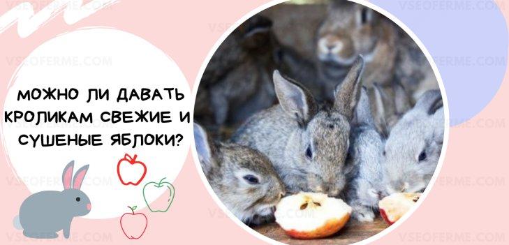 Можно ли давать кроликам свежие и сушеные яблоки