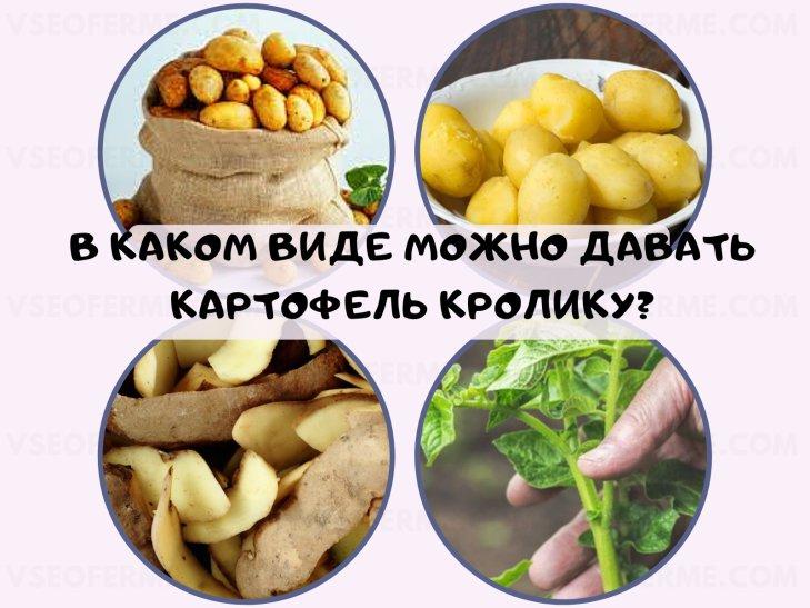 В каком виде можно давать картофель кролику?