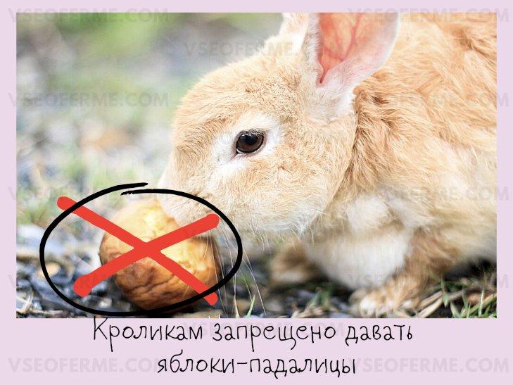 Какие сорта яблок можно давать кроликам