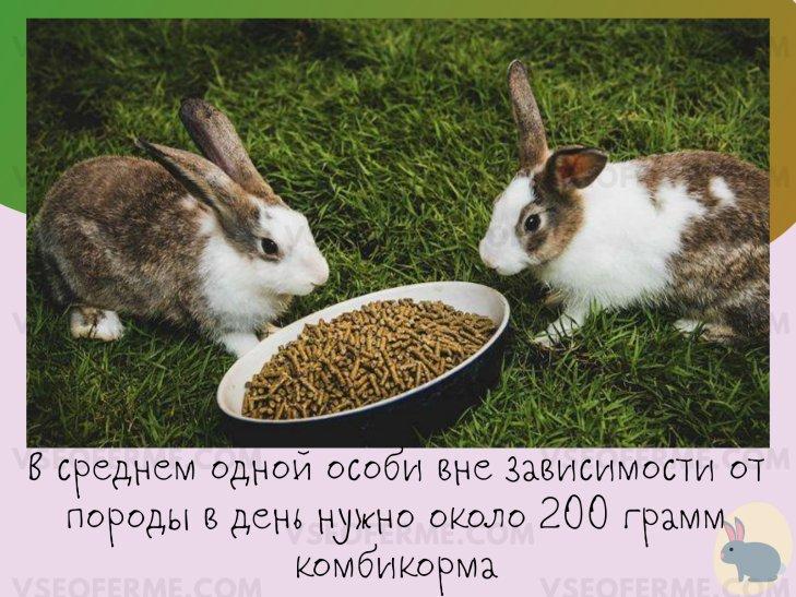 Как правильно давать гранулированные корма кроликам