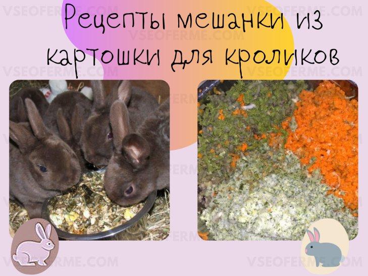 Рецепты приготовления мешанки из картошки для кроликов