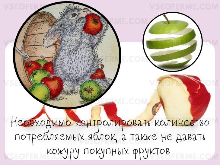 Польза и вред, который может нанести яблоко здоровью кролика