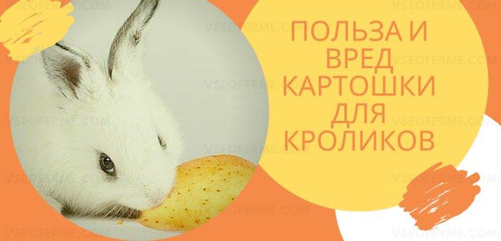 Польза и вред картошки для кроликов