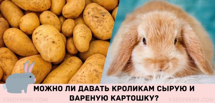 Можно ли давать кроликам сырую и вареную картошку?