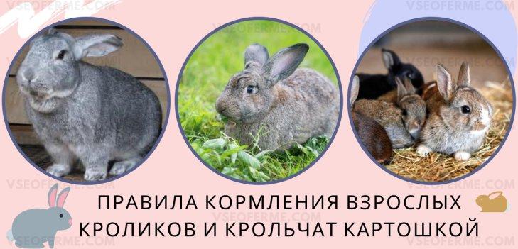 Как и сколько можно давать картофеля кролику?