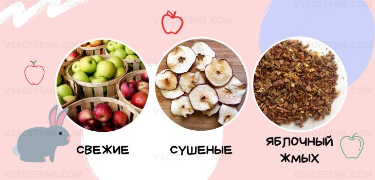 давать Кроликам свежие и сушеные яблоки