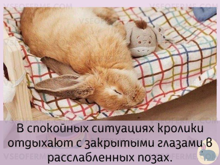 В каких условиях любят спать кролики?