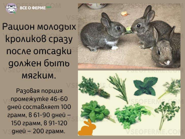Чем кормить крольчат после отсадки?