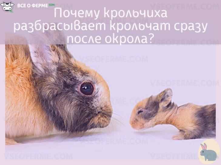 Причины, по которым крольчиха разбрасывает крольчат