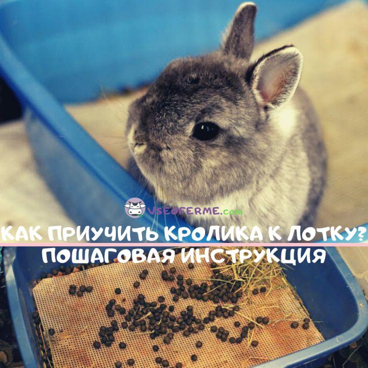 Как приучить кролика к лотку? Пошаговая инструкция